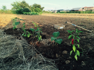 炭素循環農法(4)