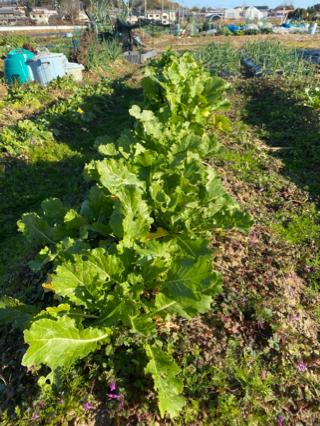 有機野菜 炭素循環農法